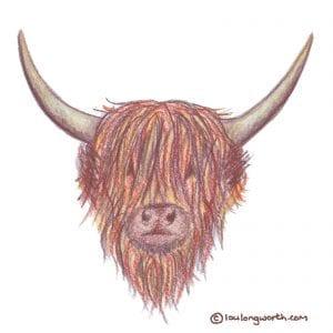 Highland Coo drawn with coloured pencils