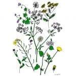 Wildflower Drawings
